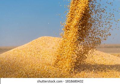 Mischen Sie Erntemaschinen für Maismais.