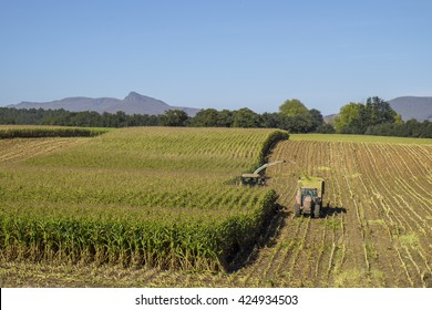 Combine harvester and tractor harvest maize crop for silage