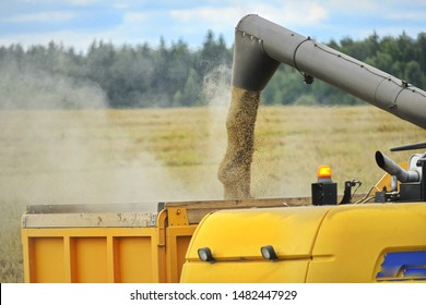 Combine Harvester Unloading Corn Grains. Corn Falling from Combine Harvester Auger into Grain Cart. Unloading Auger Pouring Corn Grain.
