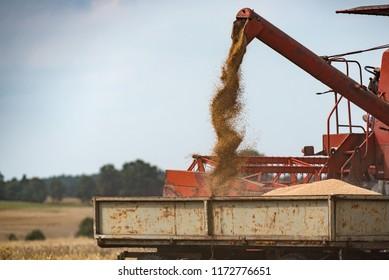 combine harvester unloading grain into the trucks trailer on sunny summer day