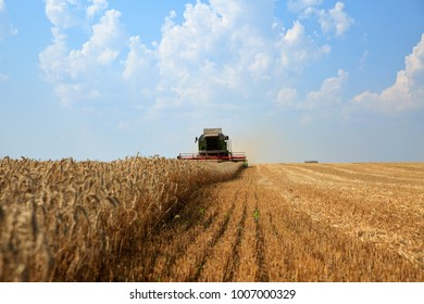 Combine harvester working on a golden ripe wheat field. Front view, blue sky with clouds in the background