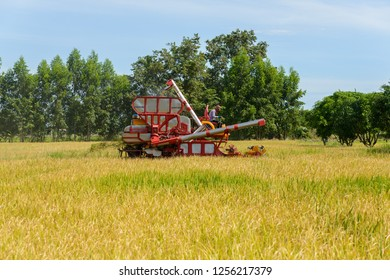 Combine harvester Working on rice field. Harvesting is the process of gathering a ripe crop from the fields in thailand