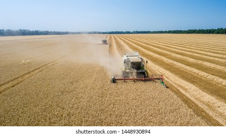 Combine harvesting: aerial view of agricultural machine collecting golden ripe wheat on the field.