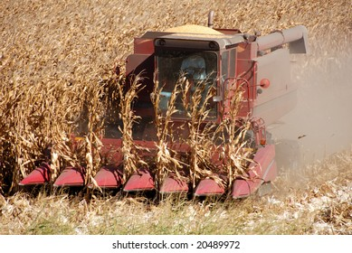 Combine harvesting corn, San Joaquin Valley, California