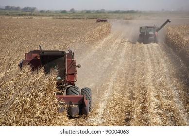 Combine harvesting corn, San Joaquin Delta, California.
