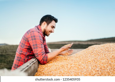 Combine harvesting details - people farmers enjoying harvested corn