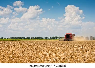 Combine harvesting wheat on field