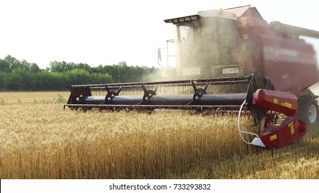 The combine harvests wheat agriculture. Agriculture harvesting combine harvester. steadicam video shot motion