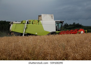 Combine in oilseed rape field, summer harvest, rape in foreground, side perspective, dramatic sky