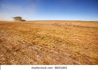 A combine on the horizon harvesting a field of lentils