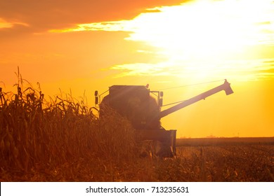 The Combine Operator Getting the Harvest of Corn on the Field of Corn at the Sunset on a Summer Evening