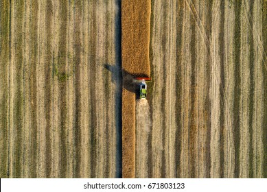 Combine working in field and harvesting the wheat seen from above. Aerial view