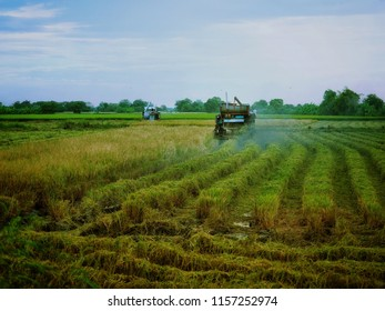 Combined harvester - reaping, threshing, and winnowing - working in the field, harvesting the rice when crop finish.