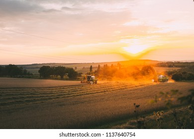 Combines while harvesting wheat.