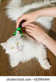 combing white fluffy angora cat Furminators