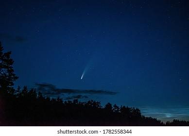 NÄHE   Nachthimmel und Bäume auf Hintergrund