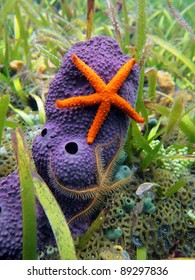 Comet starfish and brittle star on purple tube sponge, Caribbean sea