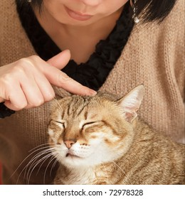 Comfortable expression on cute cat when being touched.