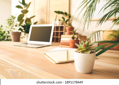 Comfortable workplace with modern laptop and green houseplants