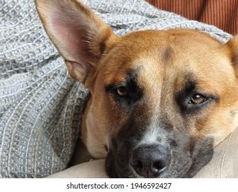 Comfy dog in a blanket