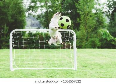 Comic dog catching football (soccer) ball saving children's goal