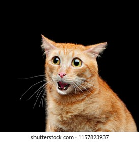Comic portrait of amazed red tabby cat
