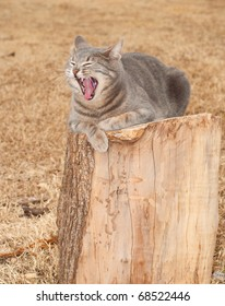 Comical image of a blue tabby cat yawning while resting on a tree stump