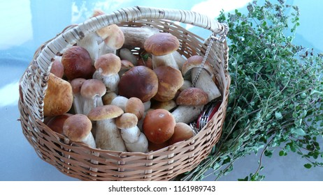 Coming back home after comestible mushrooms research...