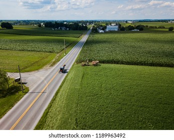 Coming together of an Amish Buggy and an Amish plow in a corn field seen from an aerial point of view