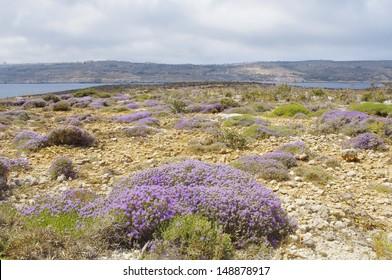 Comino island landscape, malta