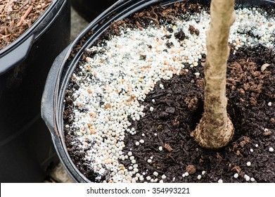Commercial fertilizer applied to tree growing in a pot