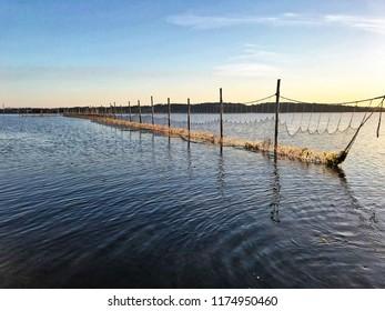 Commercial fishing in Denmark