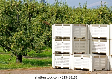 Commercial fruit packing crates sitting in an orchard on a sunny day.