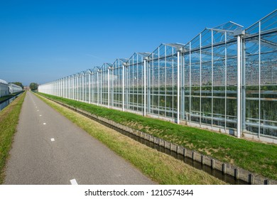 Commercial glass greenhouses in Westland. Westland is a region in of the Netherlands. It lies in the western part of the country. High tech industrial production of vegetables and flowers.