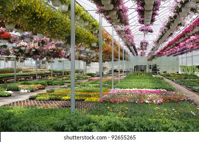 Commercial greenhouse interior
