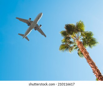 A commercial jet taking off over a palm tree