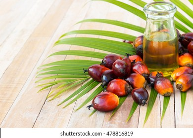 Commercial palm oil cultivation. Since palm oil contains more saturated fats  its use in food. Oil from Elaeis guineensis is also used as biofuel. It is used as a cooking and in packed food products