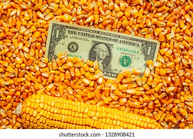 Commodity trading in USA - one dollar banknote over harvested corn kernels