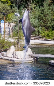 Common bottlenose dolphin jumps out of the water