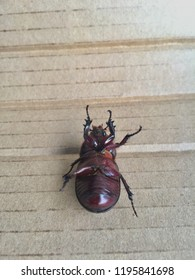 belly of beetle images stock photos vectors shutterstock