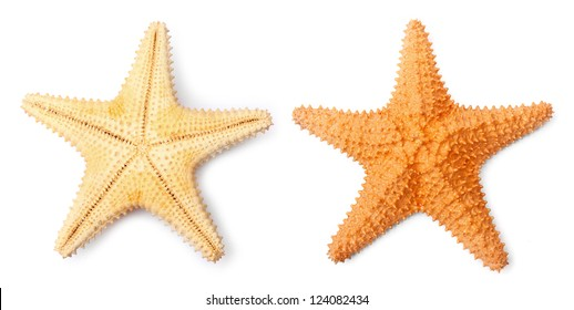 The Common Caribbean starfish (Oreaster reticulatus) isolated on a white background.
