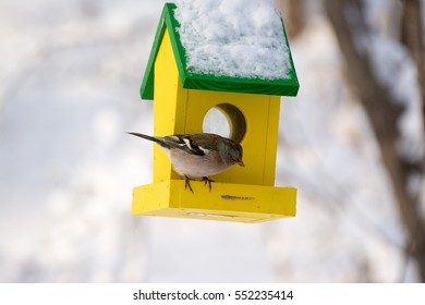 Common chaffinch standing on bright yellow bird house