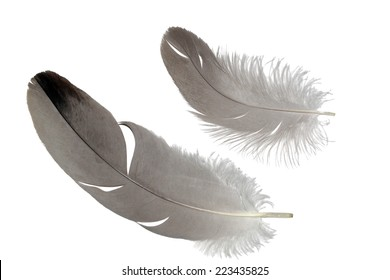 Common crane feathers set isolated on white