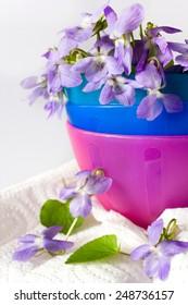 Common Dog Violet - Viola riviniana - romantic spring flower arrangement in a vase