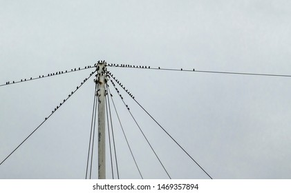 Common European starlings (Sturnus vulgaris) gather on telephone wires before flying - a murmuration. The central upright post has multiple cables and the grey blue cloudy sky provides copy space.
