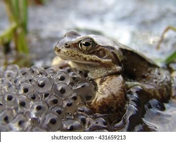 Frog Eggs Images Stock Photos Vectors Shutterstock