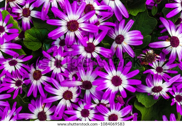 Common Garden Flowers Showing Vivid Vibrant Stock Photo