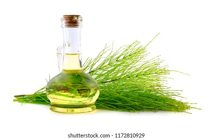 Common Horsetail Medicinal Herb Plant with Distilled Essential Oil Extract and Infusion in a Glass Jug. Also Equisetum Arvense. Isolated on White Background.