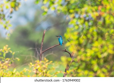 The common kingfisher, also known as the Eurasian kingfisher and river kingfisher, is a small kingfisher.