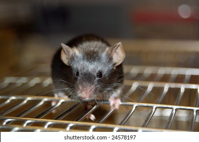 Mouse Cage Images, Stock Photos & Vectors | Shutterstock